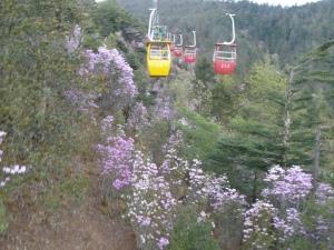 Ascent through Azaleas