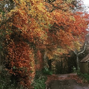 autumn trees along a country lane